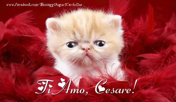 Cartoline d'amore - Ti amo, Cesare!